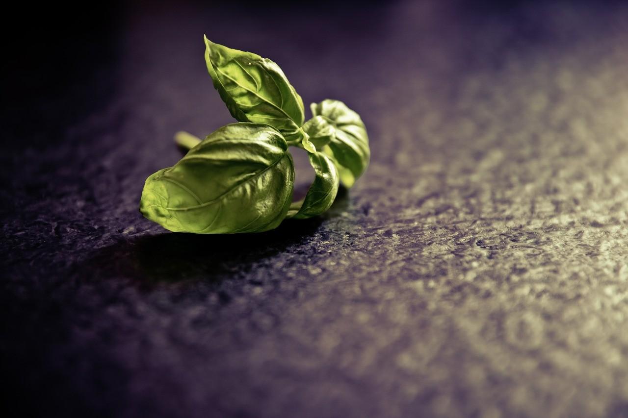 Τα βότανα και οι θεραπευτικές τους ιδιότητες!